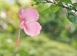 Pink Flower_.jpg