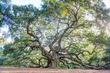 Angel Oak hdr centered 2.jpg