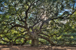 Angel Oak hdr centered.jpg