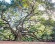 Angel Oak hdr off-center.jpg