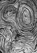 Burl Face Black and White.jpg