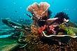 IJ07_CoralSweeperScene-snp.jpg