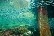 PNG09_BaitfishUnderPier-0352.jpg