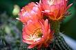cactus_3651r.jpg