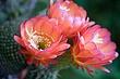 cactus_3652r.jpg