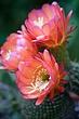 cactus_3652r1.jpg