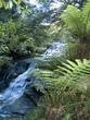 Leura Cascades.jpg