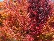 autumn colours 3.jpg