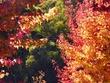 autumn colours 4.jpg