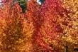 autumn colours 5.jpg
