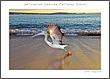 pelican take-off.jpg