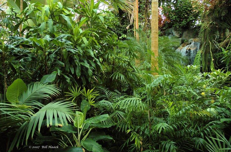 12_DSC_3243 MBG jungle waterfall 112307.jpg