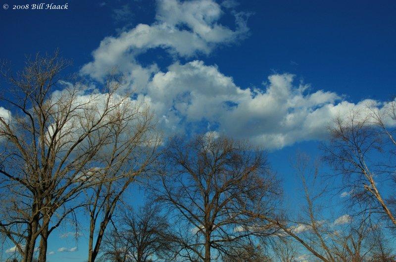 12_DSC_5017 winter trees blue skies 021008.jpg