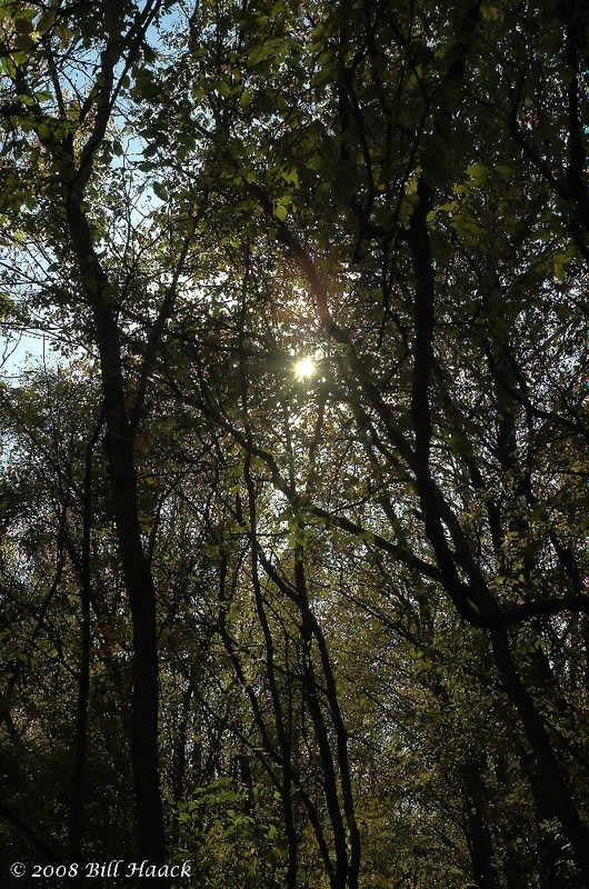12_DSC_6656 sun star thru trees PUCC outing 102708.jpg