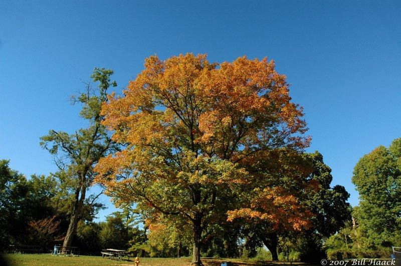 16_DSC_0707 fall color 100607.jpg