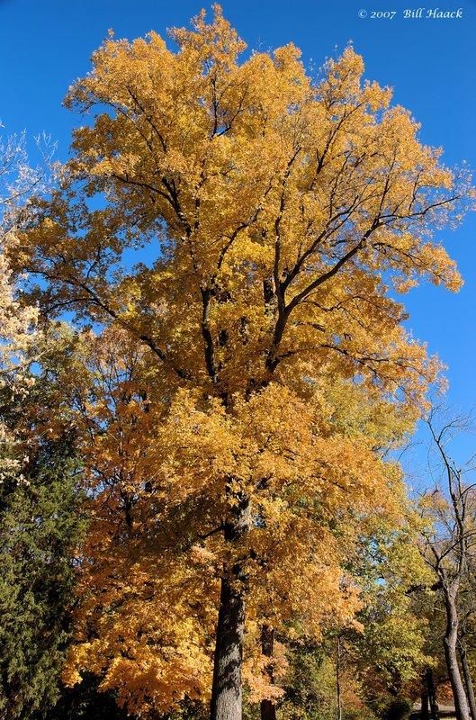 16_DSC_1692 fall color 2007 110507.jpg