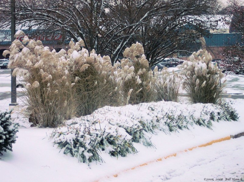 20_100_3280 snow covered bushes 120805.jpg