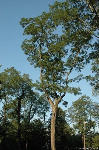 12_DSC_7292 tree sky Vago 070106.jpg