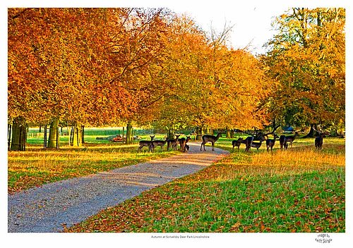 Autumn in the Deer Park Scrivelsby.jpg