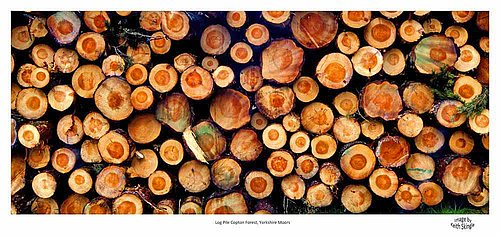 Log Pile Yorkshire Moors.jpg