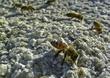 Honey Bee DSCN4786.jpg