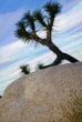 Joshua Tree Experimental2DSC_4862.jpg