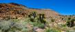 Mojave_1ccP.jpg