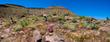 Mojave_1ccP4.jpg