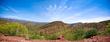 Saguaro    _1ccP3.jpg
