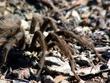 Tarantula DSCN1361e.jpg