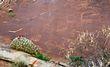 Petroglyph    _DS73874_1cc.jpg