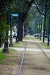 St Charles Avenue Line    _DS71993_1cc.jpg
