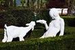 Girl Feeding Lamb    _D3C6875_1cc.jpg
