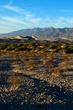 Mesquite Dunes    _D3C5591_1cc.jpg