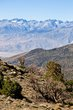 Owens Valley    _D3C1939_1cc.jpg