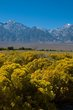 Owens Valley    _D3C9528_1cc.jpg