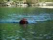 Water Dog    DSCN4187e.jpg