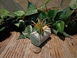 Tiny Cored Etched Planter 1.jpg