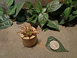 Tiny Cored Stone Planter Pot -1.jpg