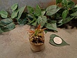 Tiny Cored Stone Planter Pot -11.jpg