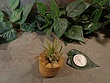 Tiny Cored Stone Planter Pot -2.jpg