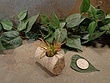 Tiny Cored Stone Planter Pot -7.jpg