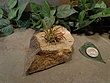 Tiny Natural Stone Planter Pot-1.jpg