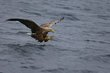 sea-eagle 8280.jpg