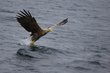 sea-eagle 82821.jpg