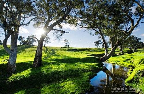 nature-bp-001.jpg