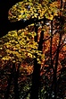Autumn New Jersey 1525.jpg
