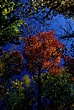 Autumn New Jersey 1528.jpg