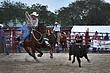homestead rodeo 2010 (122).jpg