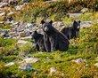 Bears_810Shrp.jpg